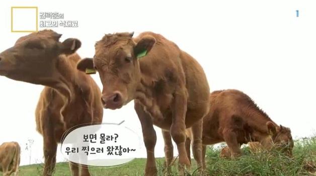아주 각별한 기행, 김락훈의 최고의 식재료 - 초원을 달리는 한우