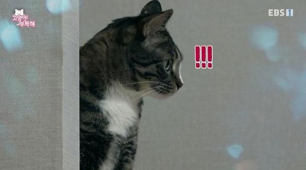 고양이를 부탁해, 콜라 vs 스타 왕좌의 게임