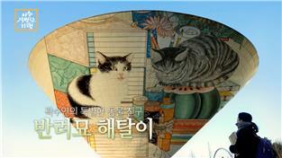 곽수연의 특별한 동물 친구- 반려묘 해탈이