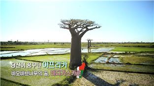당신이 꿈꾸던 아프리카-바오바브나무의 꿈,마다가스카르