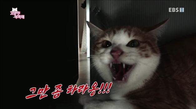 고양이를 부탁해 , 무법자 고양이 미돌이