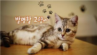 지식채널e, 발명할 고양~