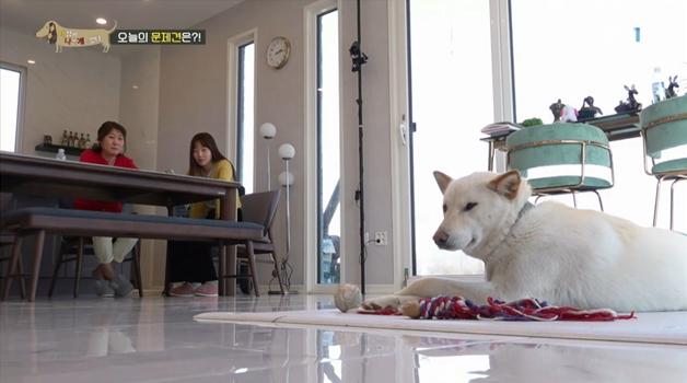세상에 나쁜 개는 없다, 거실을 점령한 개, 봄이