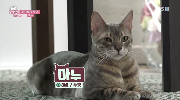 고양이를 부탁해 , 나만 바라보라'냥' 마누