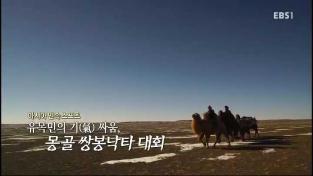 아시아민속스포츠 유목민의 기싸움 몽골 쌍봉낙타대회