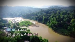 아시아 최후의 정글 4부 열대 우림 속 숨은 보석