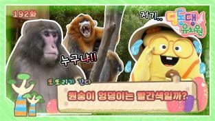 딩동댕유치원, 원숭이 엉덩이는 빨간색일까?