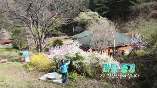 한국기행, 마당 풍경 2부 심심산골에 삽니다