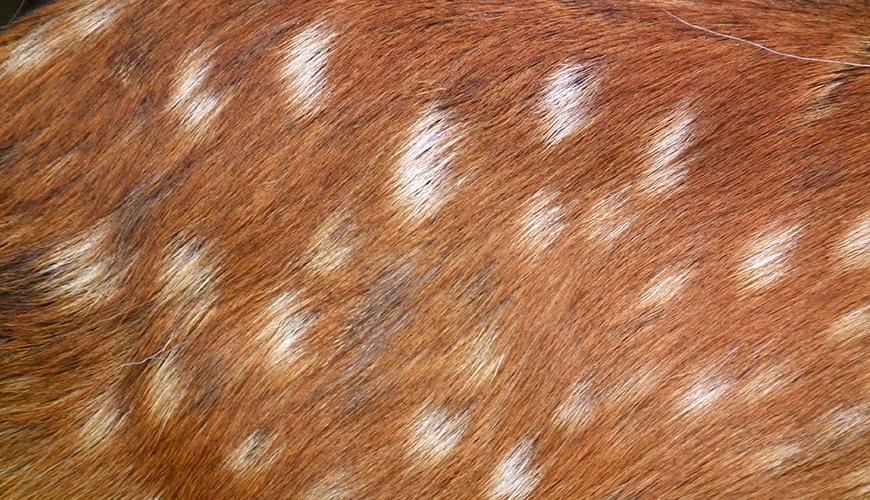 동물 세포